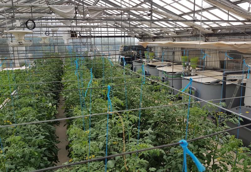 synthèse pour la production végétale